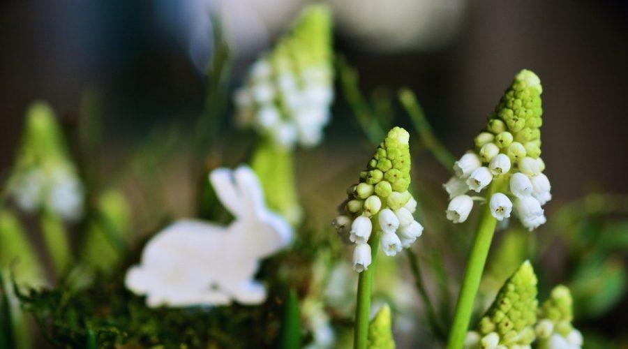 Fleurir les balcons des EHPAD