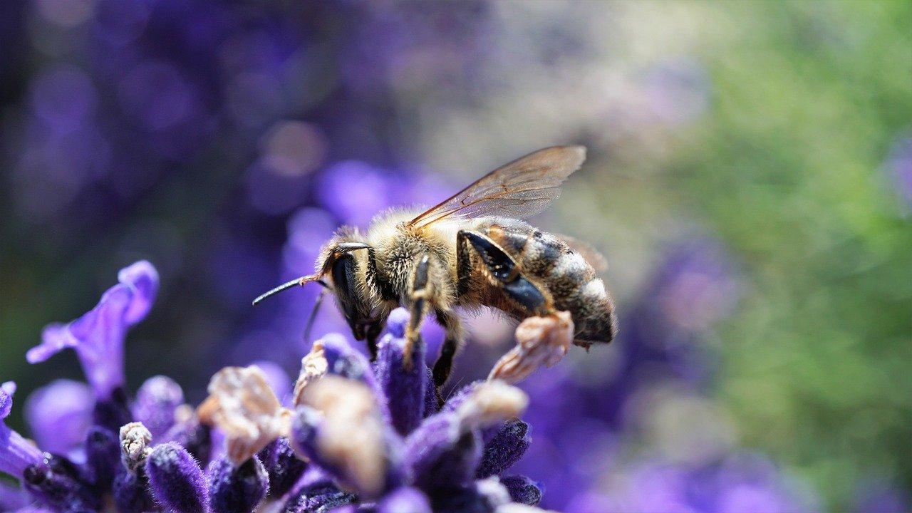Biodiversité en danger