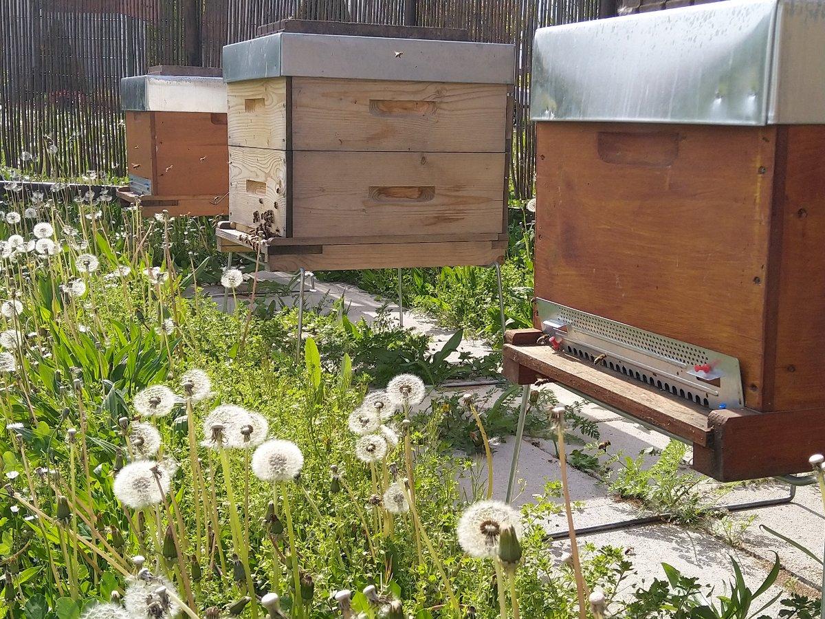 EHPAD Vendenheim Les 4 Vents ruches